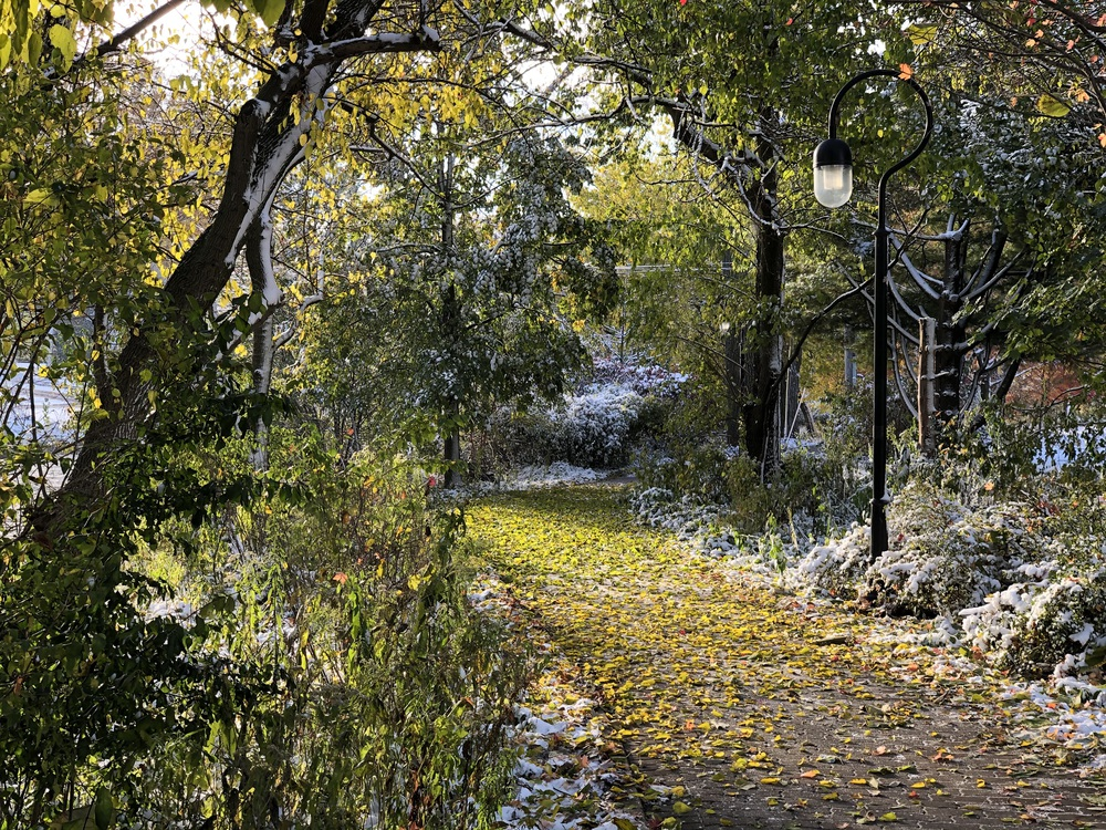 Path with leaves and snow