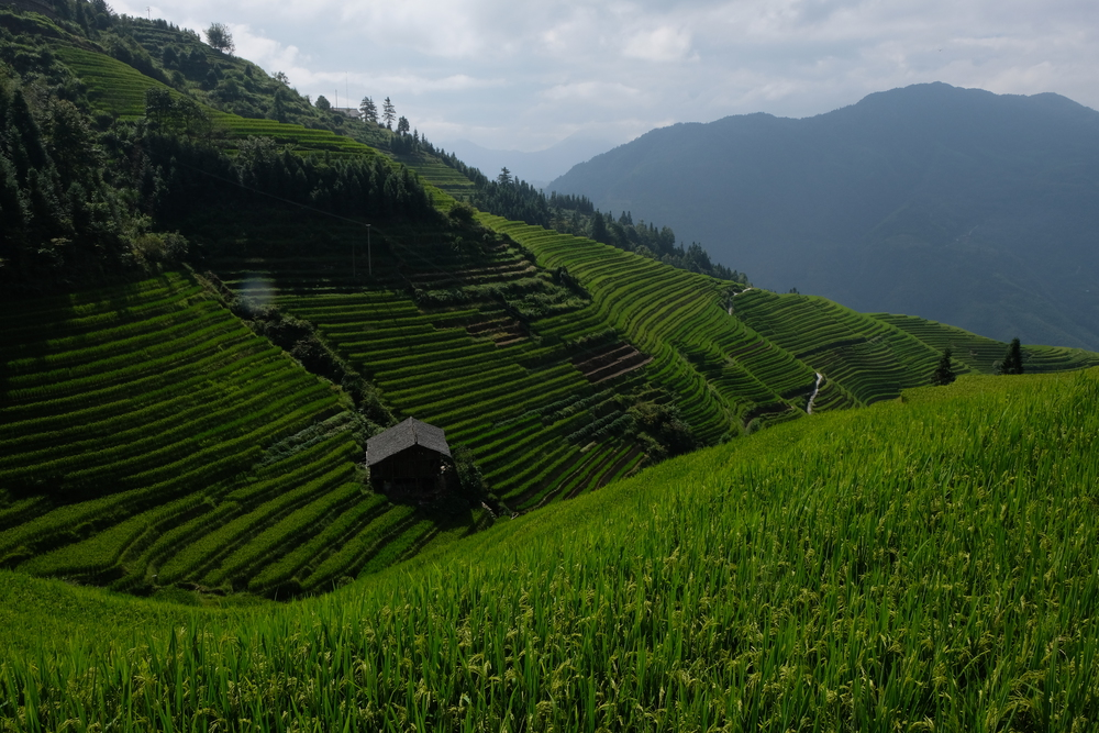 Photo of rice terraces